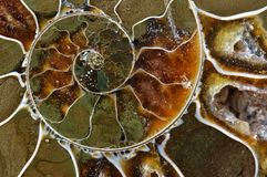 Съемка макроса превращенного в камень аммонита стоковые фото