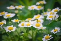 съемка макроса цветка dof крупного плана стоцвета отмелая Стоковые Фотографии RF