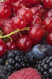 съемка макроса ягод Стоковые Изображения RF