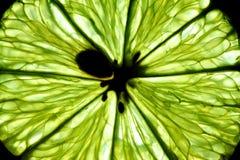 съемка макроса limon зрелая Стоковая Фотография