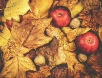 Съемка осени яблок и листьев желтого цвета Стоковые Изображения