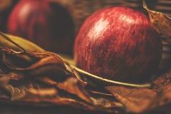 Съемка осени яблок и листьев желтого цвета Стоковая Фотография RF