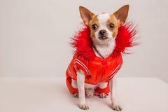 Съемка портрета собаки Стоковые Изображения