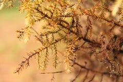 съемка природы Стоковое фото RF