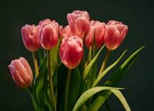 Съемка студии букета тюльпана весны Стоковые Изображения RF