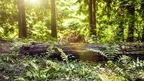 Съемка слайдера леса лета акции видеоматериалы