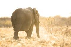 Съемка слона светлого тонового изображения стоковое изображение