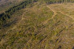 Съемка трутня обезлесения воздушная стоковое фото