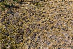 Съемка трутня обезлесения воздушная стоковые изображения rf