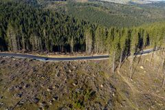 Съемка трутня обезлесения воздушная стоковые фото