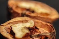 Съемки макроса Wallnuts Стоковая Фотография RF