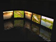 Съемки природы Стоковые Изображения