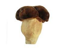 съестной гриб Стоковые Фото