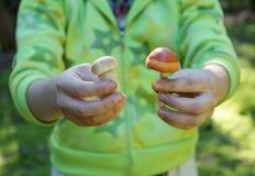Съестной и съестной гриб Стоковое Изображение RF