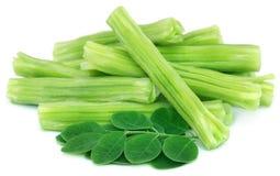 Съестной moringa oleifera с зелеными листьями стоковые фотографии rf