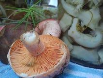 Съестные грибы пущи Стоковые Фотографии RF