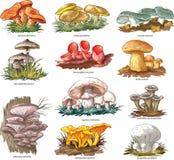 Съестные грибы Стоковые Фото