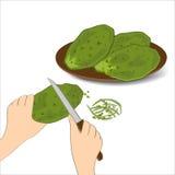 Съестные зеленые листья или nopales кактуса на белой предпосылке Нарисованная рукой иллюстрация вектора Стоковое фото RF