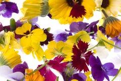 съестные изолированные цветки стоковая фотография
