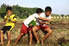 Съешьте в поле риса Стоковая Фотография