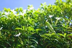съешьте глиста цветка Стоковые Изображения
