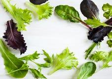 съешьте свежую весну смешивания салатов свежий зеленый салат Стоковые Фотографии RF