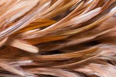 Сыпня пера Стоковое Фото