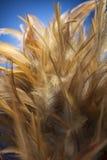 Сыпня пера Стоковая Фотография RF