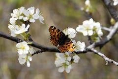 Сыпь бабочки на цветке стоковые изображения rf
