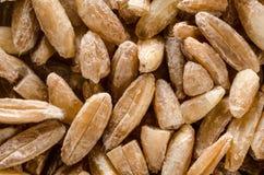 Сырая сырцовая коричневая сказанная по буквам пшеница еда вареников предпосылки много мясо очень Стоковые Фотографии RF
