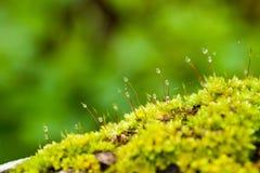 Сыроватость лишайника Стоковые Фото