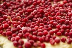 Сырой пирог красной смородины в лотке пирога металла Плодоовощи и ягоды красного цвета конец вверх Стоковое фото RF