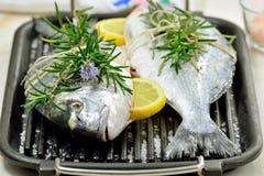 2 сырой рыбы Стоковые Фотографии RF