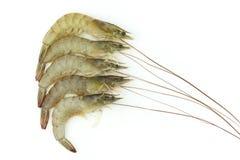 Сырцовая креветка изолированная на белой предпосылке Стоковая Фотография RF