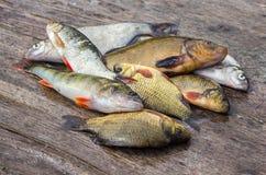 Сырцовая пресноводная рыба на деревянной доске Стоковые Фотографии RF