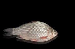 Сырцовая пресноводная рыба на черной предпосылке Стоковая Фотография RF