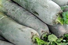 Сырцовая редиска в зеленом цвете Стоковые Изображения RF