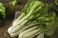 Сырцовое зеленое органическое Bok Choy Стоковая Фотография RF
