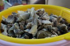 Сырцовое мясо черепахи Стоковое Фото