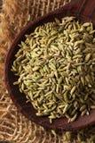Сырцовое органическое семя фенхеля Стоковые Фотографии RF