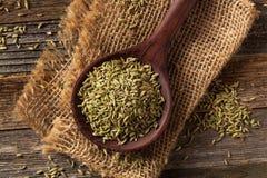 Сырцовое органическое семя фенхеля Стоковое Фото
