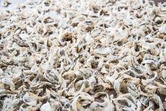 Сырцовое съестное гнездо птицы Стоковая Фотография RF