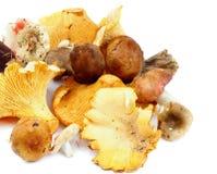 Сырцовые грибы леса Стоковое Фото