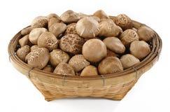 Сырцовые грибы шиитаке Стоковое Изображение