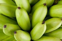 Сырцовые золотые бананы на изолированной еде плодоовощ банана Mas Pisang белой предпосылки здоровой Стоковые Фотографии RF
