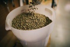 Сырцовые кофейные зерна в ведре стоковое фото
