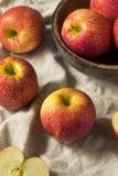Сырцовые красные органические яблоки завистливости стоковое изображение