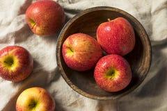 Сырцовые красные органические яблоки завистливости стоковые фото
