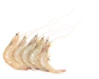 Сырцовые креветки Стоковые Изображения RF