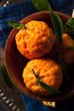 Сырцовые органические апельсины мандарина золотого самородка Стоковое Фото